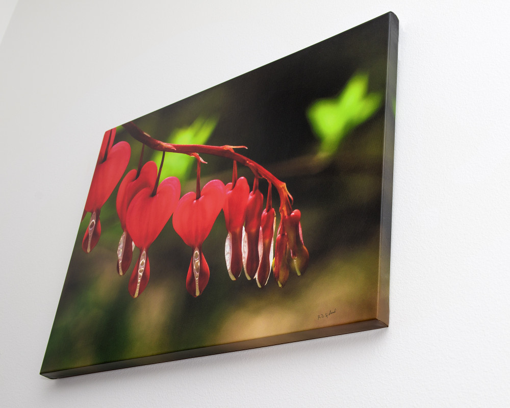 Canvas Gallery Wrap Prints